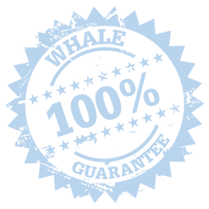 Grafikk - Whale Guarantee Light Blue 300x300