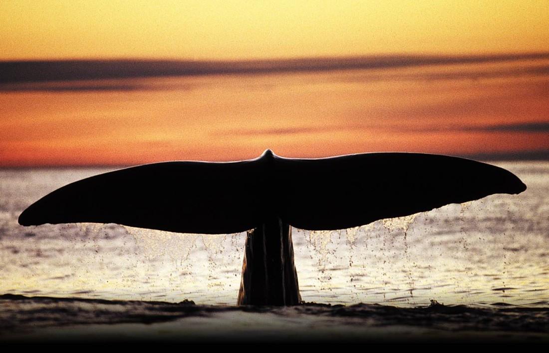ballenas tromso