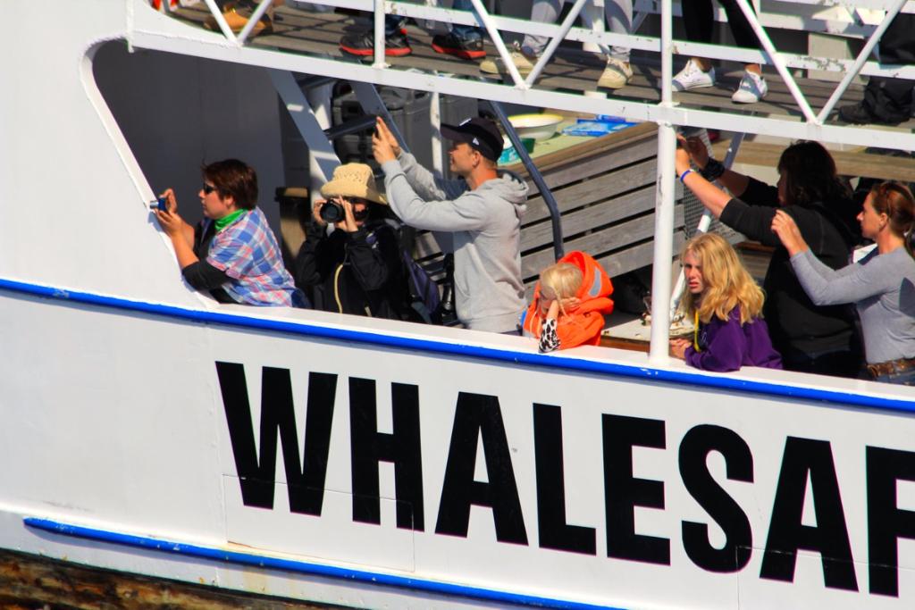 Hvalsafari Andenes - Whalesafari Andenes